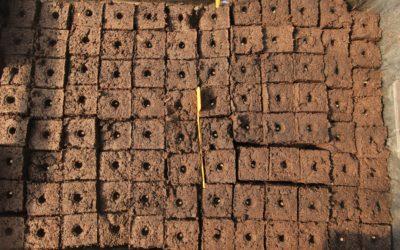 Cycle : Techniques de culture agro-écologique pour son jardin-potager