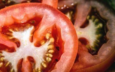 Techniques de culture agro-écologique pour son jardin-potager (3/3) – 15 septembre 2019