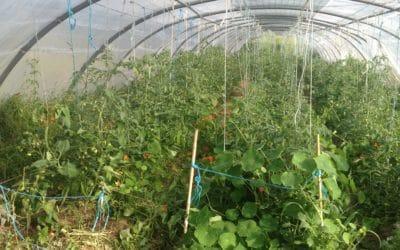 Cycle : Techniques de culture agro-écologique pour son jardin-potager (2/3)