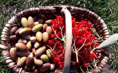 Balade – cuisine des plantes sauvages en automne – 23 novembre 2019