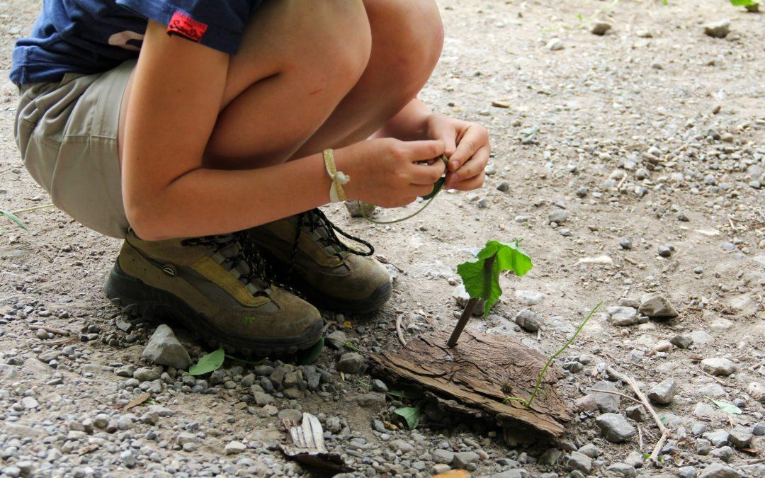 Stage nature et cuisine : à la découverte des plantes sauvages – 13-17 juillet 2020 – COMPLET !